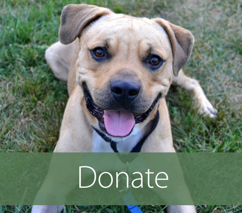 Helping Hounds Dog Rescue