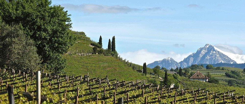 beautiful mountain vineyards