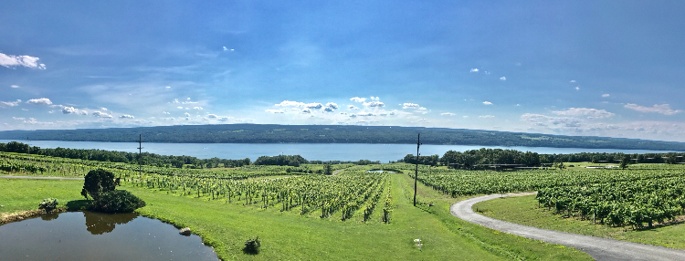 Vineyards overlooking Beautiful Seneca Lake in New York's Finger Lakes Region. Photo by Lisa Denning
