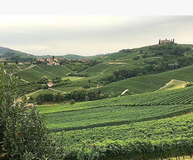 Stunning vineyard views from Palas Cerequio.