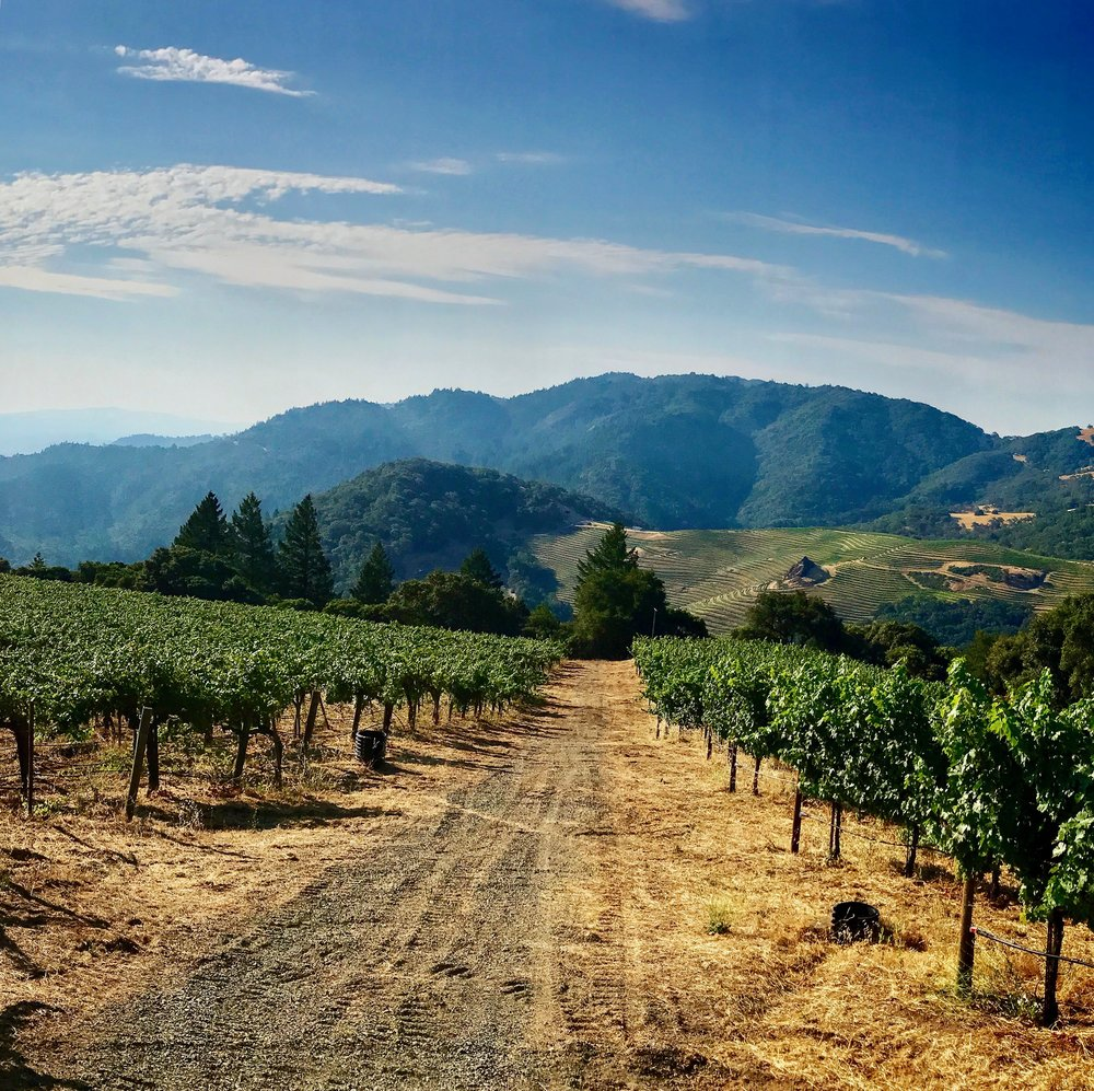Spectacular Views from Cain Vineyards