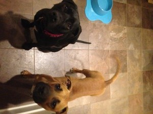 Lisa's pooches: Lily (left) and Chesney (right)