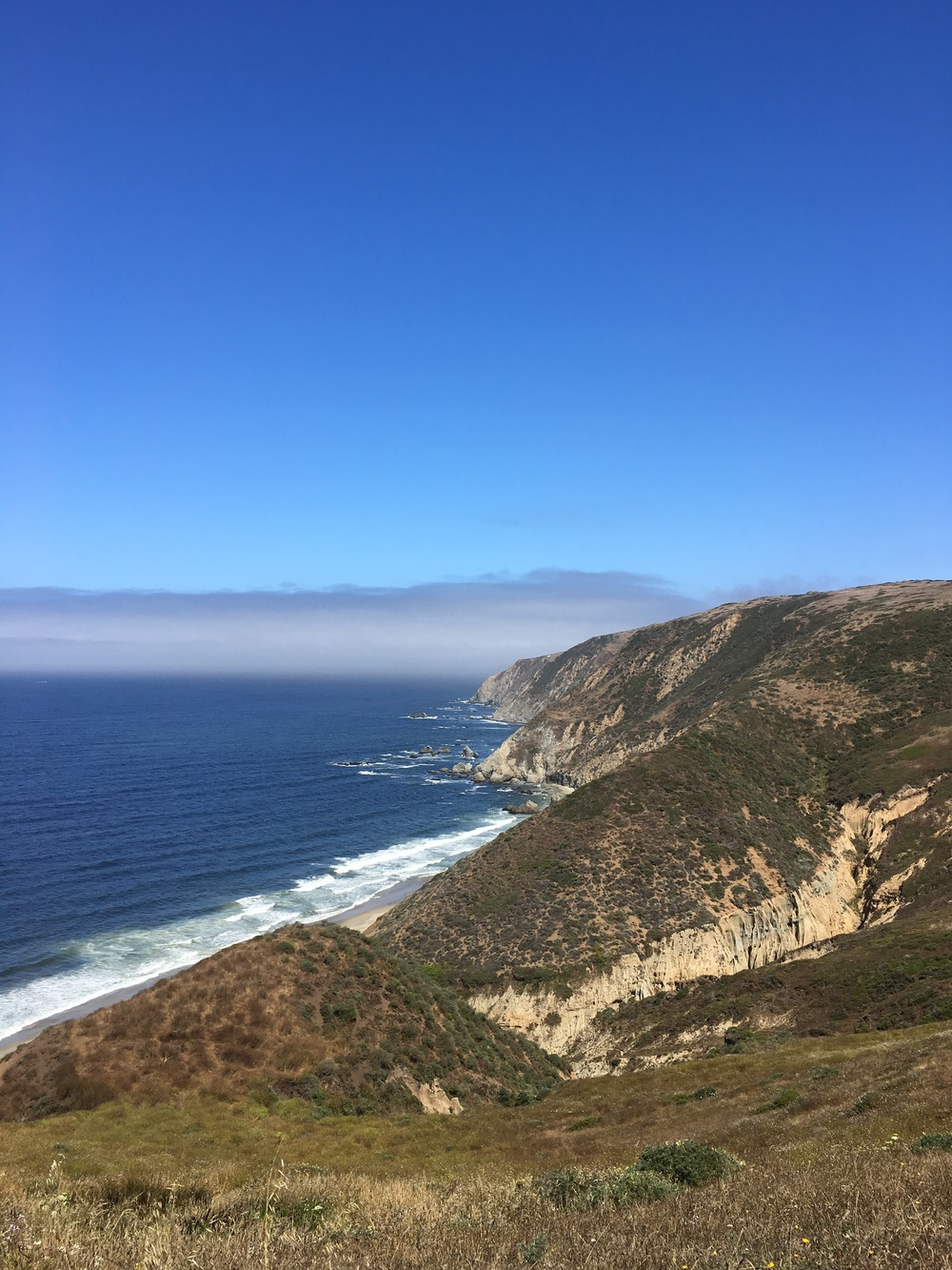 View from Elk Refuge / Tomales Point hike