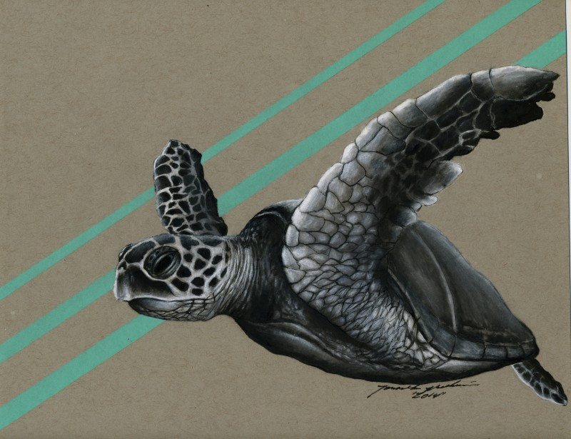 SEAhawk022