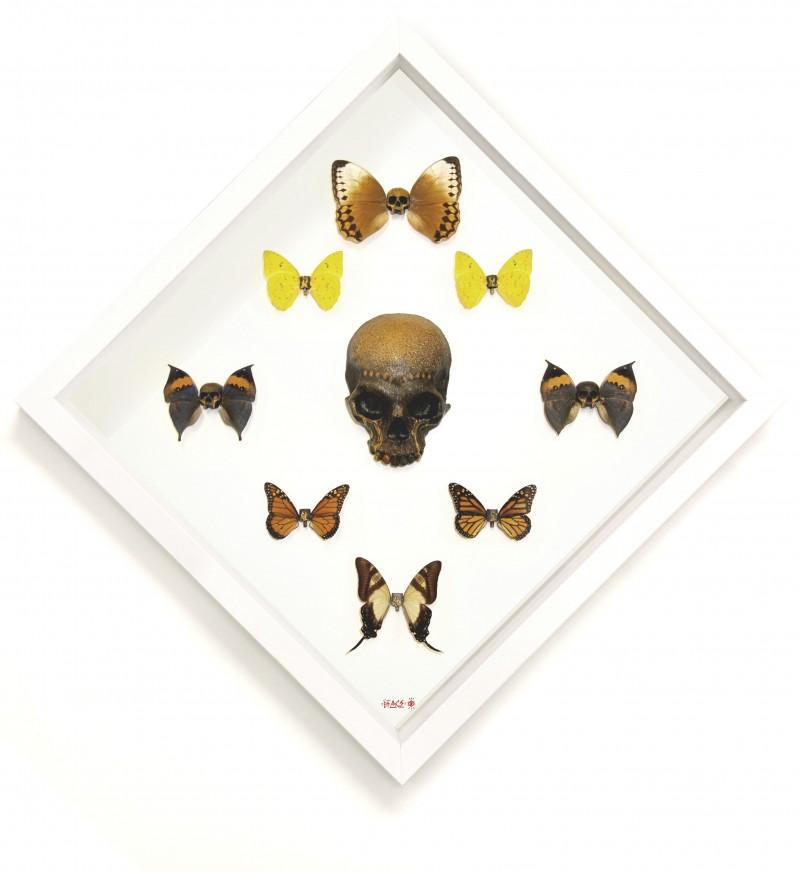 Lepidoptera Flutterdie Tray Set