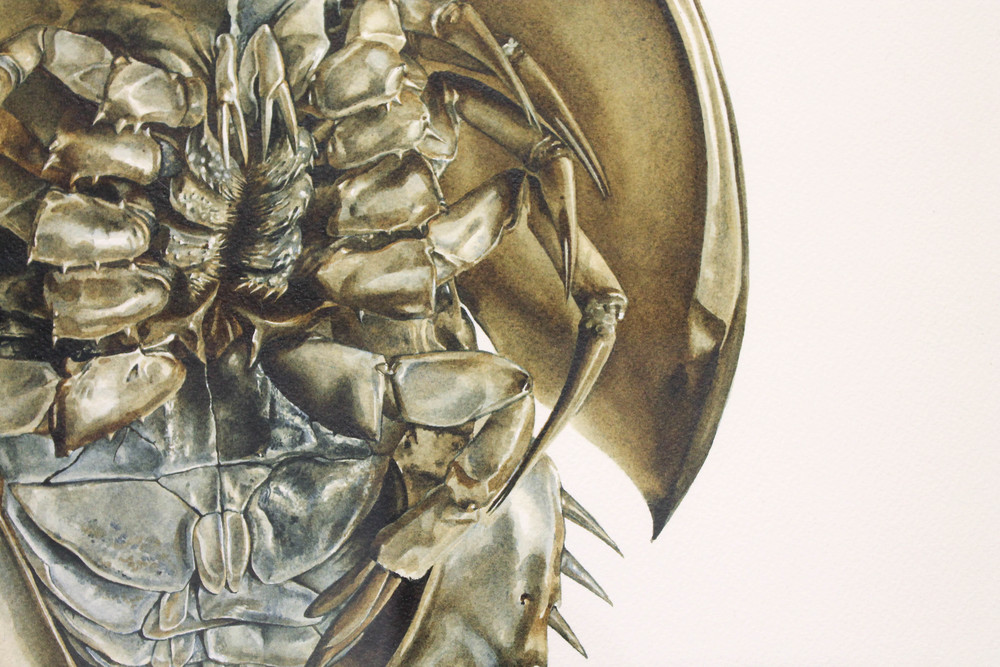 Jeff P., 'Ordovician Obduro II' (detail)
