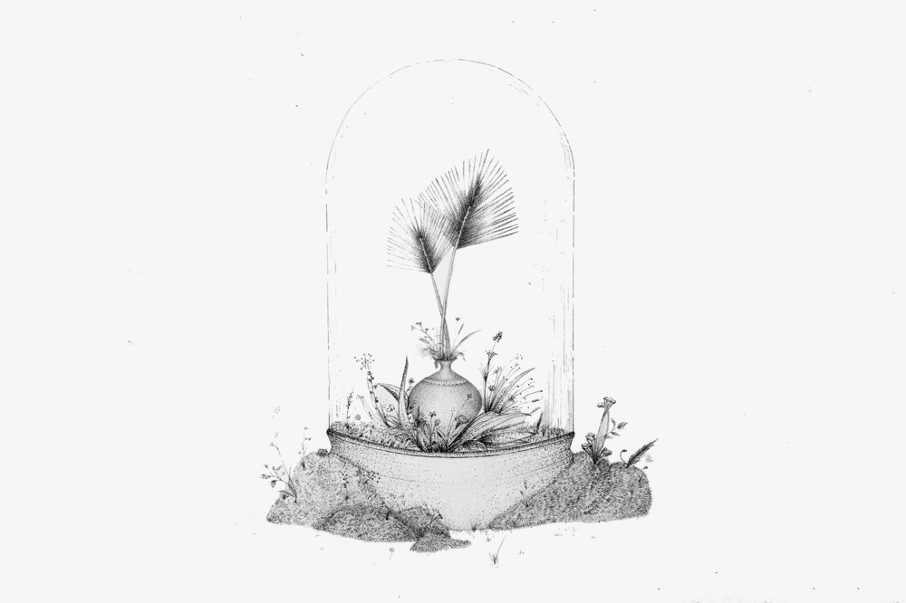 terrarium Illustration-Thumbnail-web.jpg