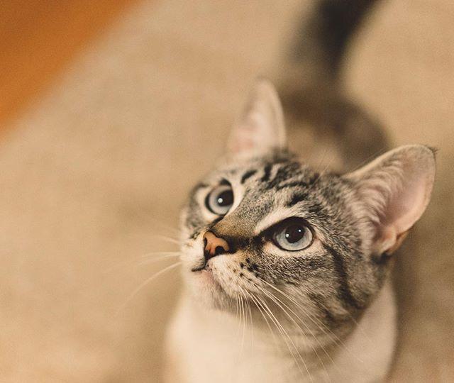 Tonks is the best cat.