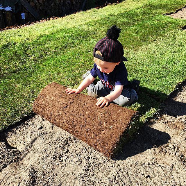 """Tämän viikon teema oli """"piha kuntoon"""" Onneksi oli ammattilainen rullailemassa nurmikoita paikoilleen 😄😎☀️ #pikkuapuri #nurmikotrullalla"""