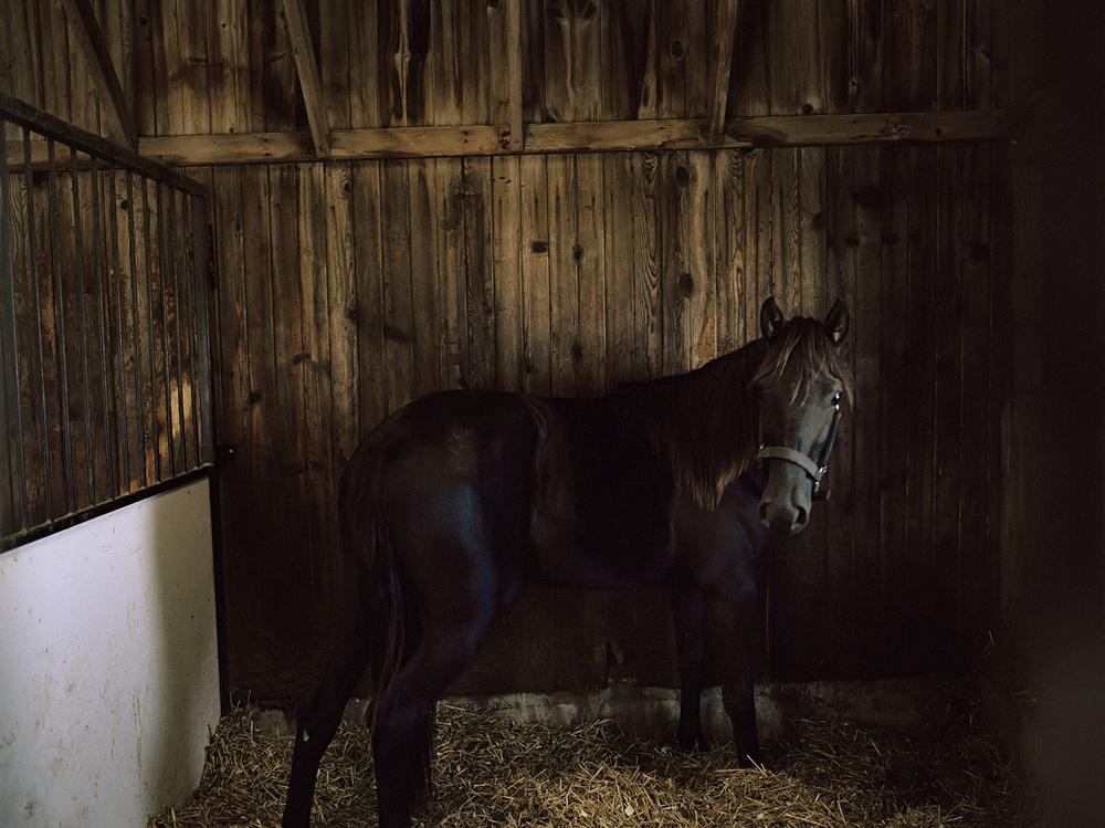 horse_f_flat.jpg