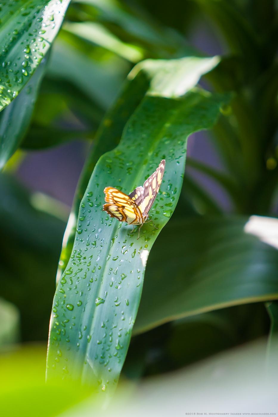 Aruba 20120506 - 0023.jpg