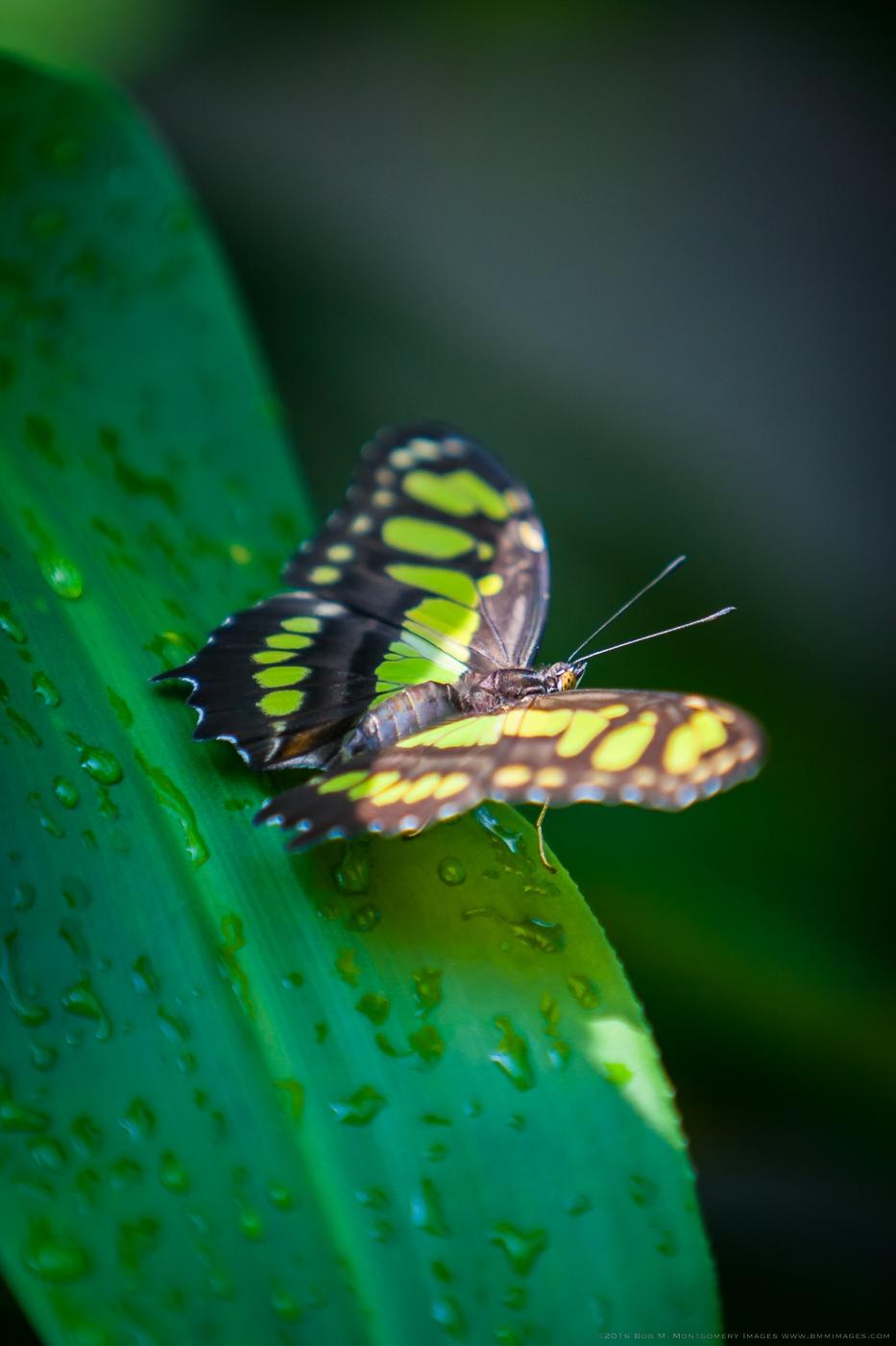 Aruba 20120506 - 0025.jpg