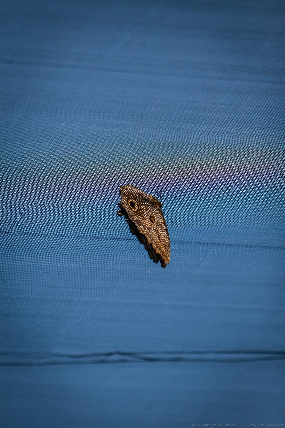 Aruba 20120506 - 0026.jpg