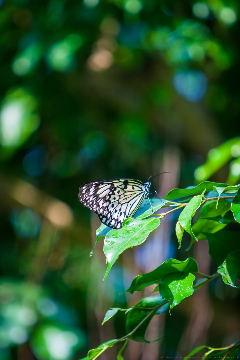 Aruba 20120506 - 0030.jpg