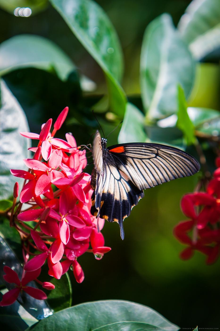 Aruba 20120506 - 0033.jpg