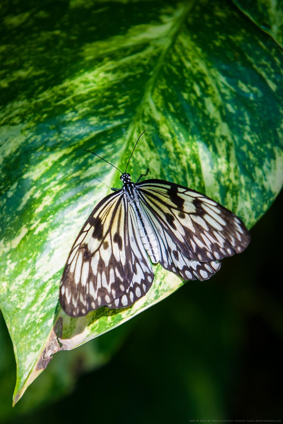 Aruba 20120506 - 0034-2.jpg