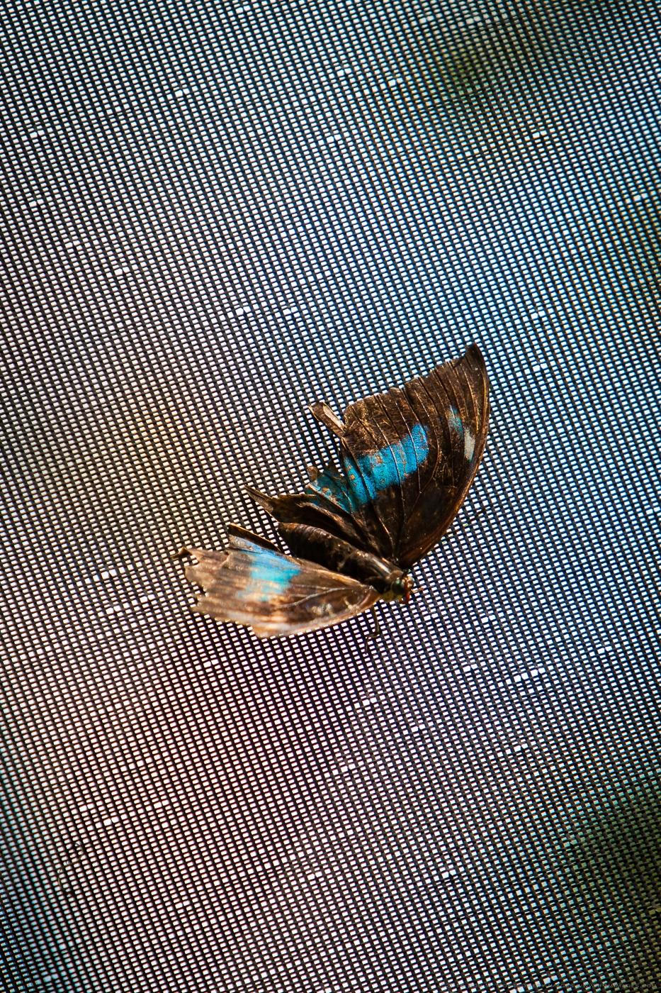 Aruba 20120506 - 0037.jpg