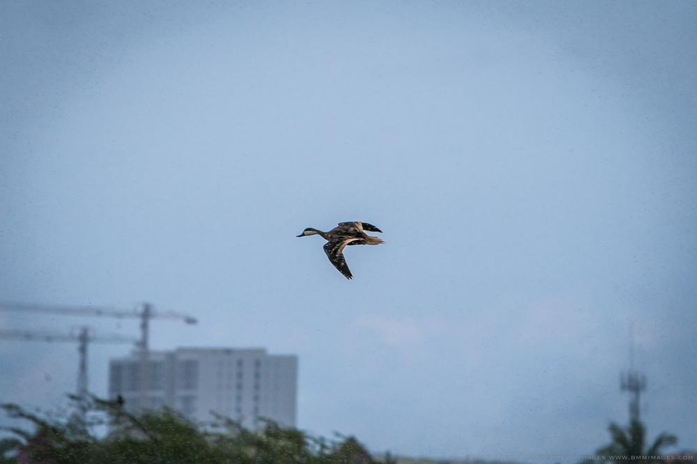 Aruba 20120507 - 0054.jpg