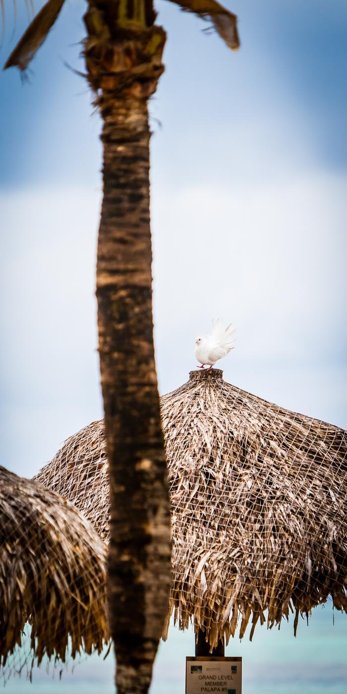 Aruba 20120507 - 0063.jpg