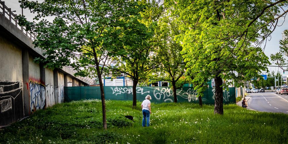 A pocket of simple greenery in Praha 8, Czechia.