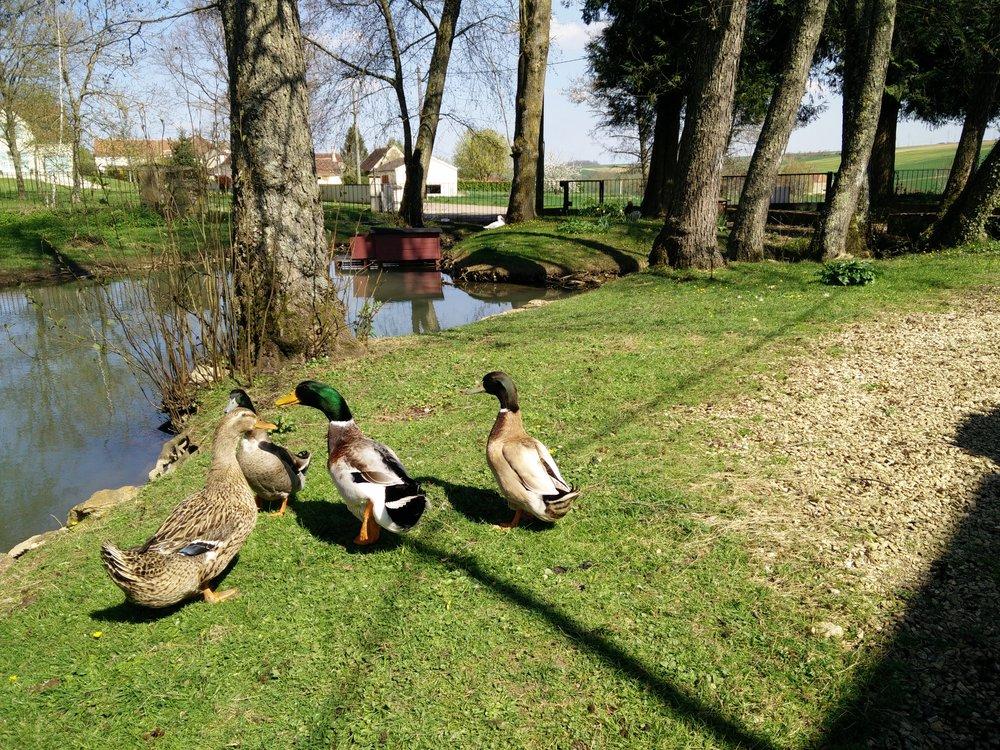 La Barbotière - le jardin et les canards
