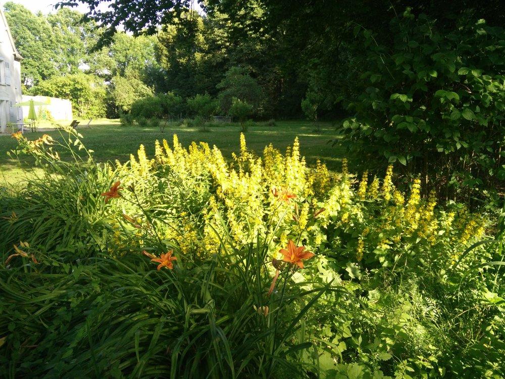 La Barbotière - le jardin