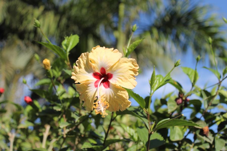 costa rica playa hermosa flowers wild