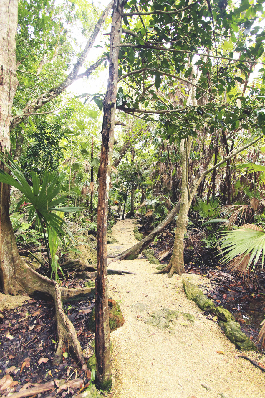 jungle palm trees path mexico tropical