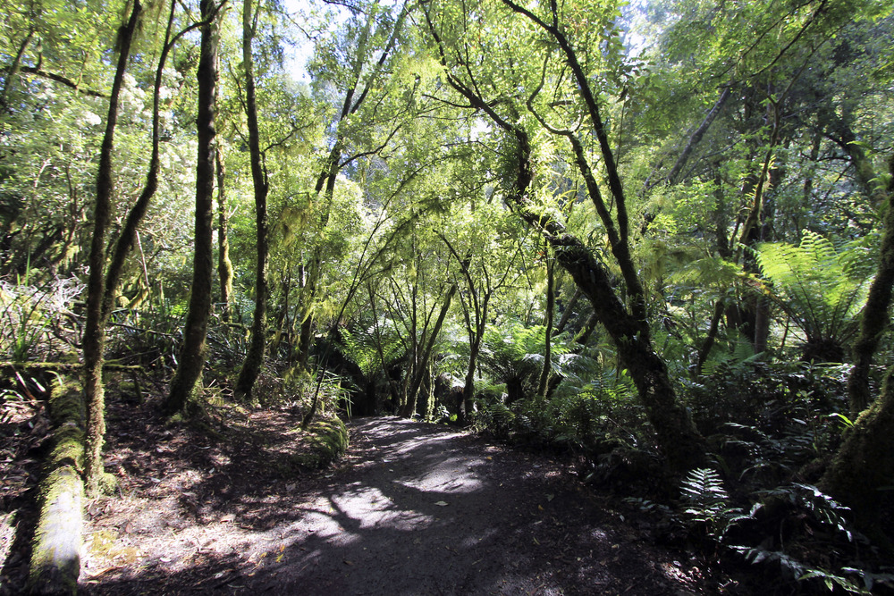 great-otway-national-park-rainforest.jpg