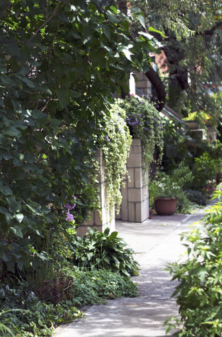 flowery sidewalk leafy green