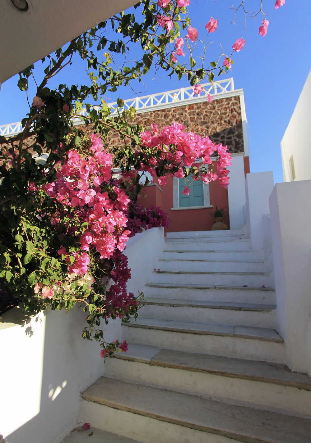 bougainvillea oia santorini morning travel beauty.jpg