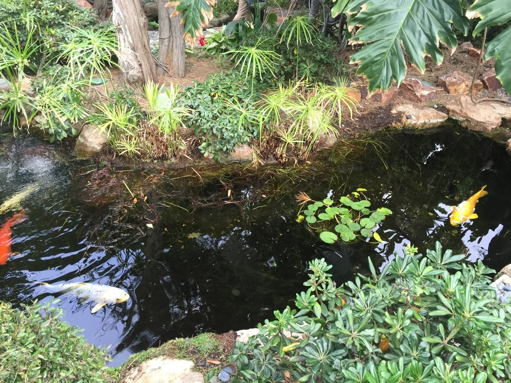 One of several Koi Ponds in the Gardens