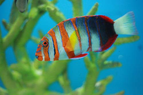 Tropical Fish Store Nassau County