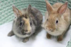 Two Bunnies on Blanket | Bunnies for Sale Mineola | Bunnies for Sale Nassau County
