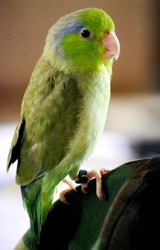 Photo source: wikimedia