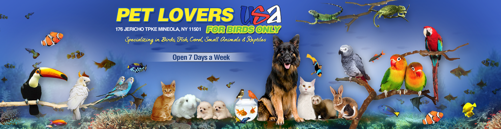 For-Birds-Only-_-Exotic-Pet-Store-Nassau-County.png