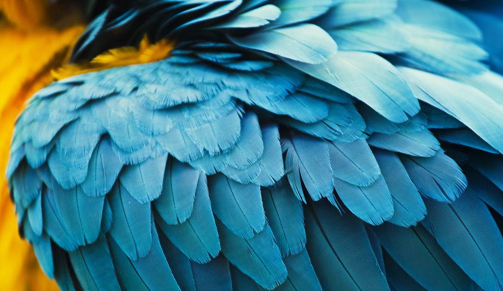 Blue Parrot - For Birds Only - December 21, 2017.jpg