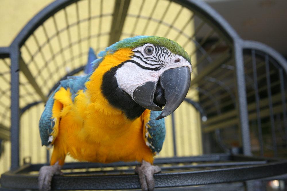 Macaw - Bird Cage.jpg