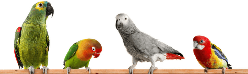 types-of-parrots.png