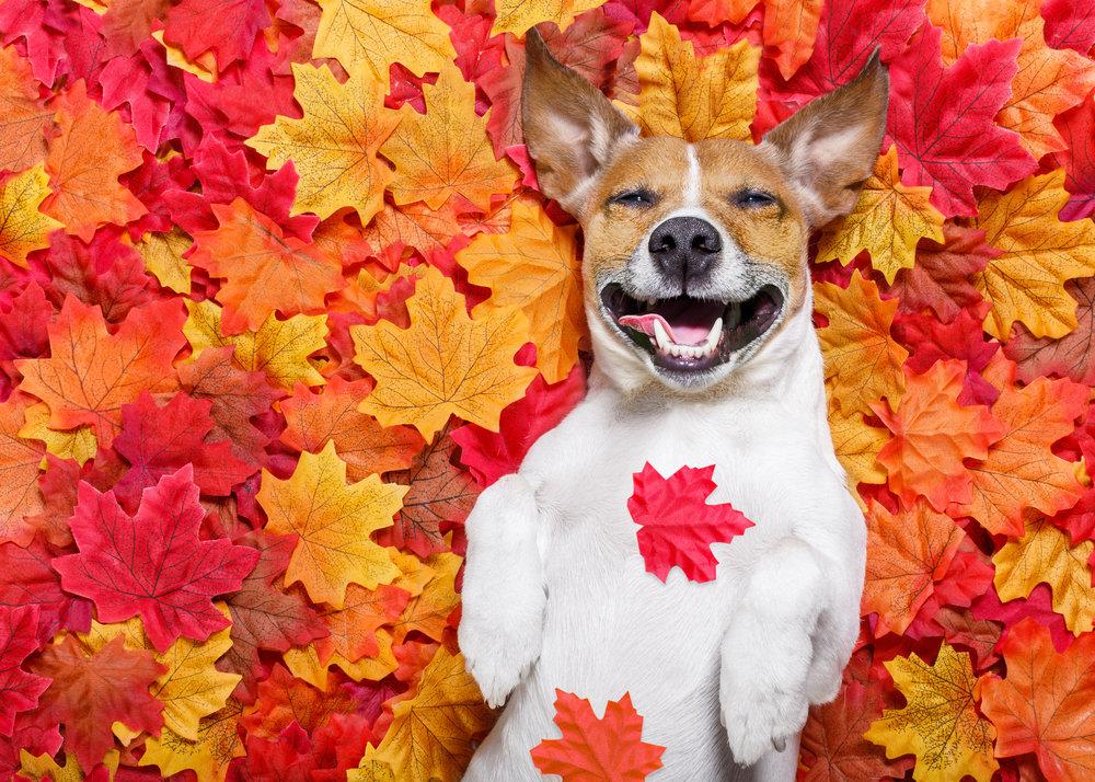 Leaf Dog - SEPT 6, 2018.jpg