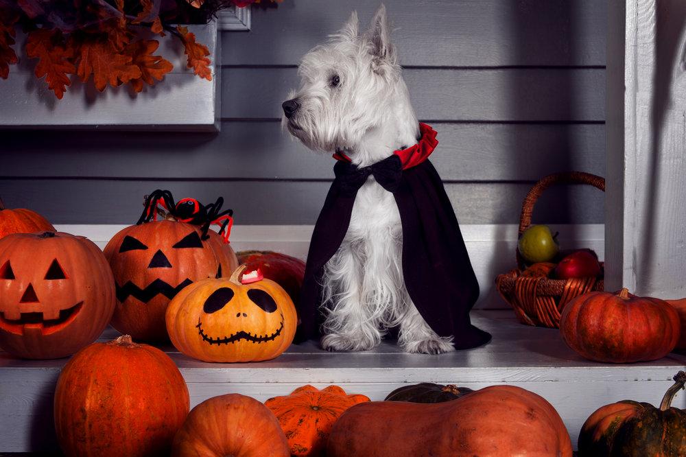 Halloween Dog - OCT 16, 2018.jpg