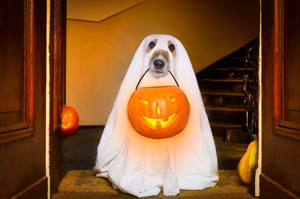 Ghost Dog - OCT 30, 2018.jpg