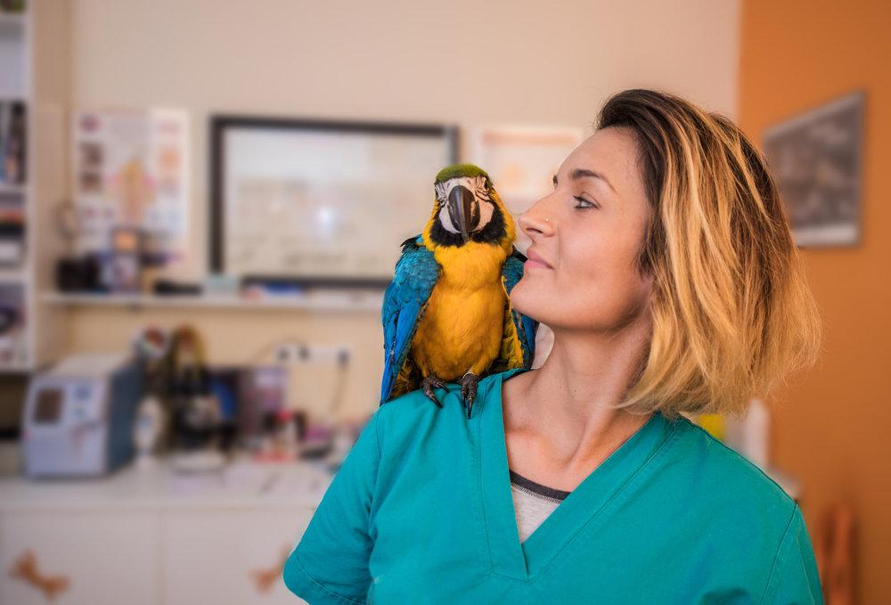 Parrot at Vet - NOV 6, 2018.jpg