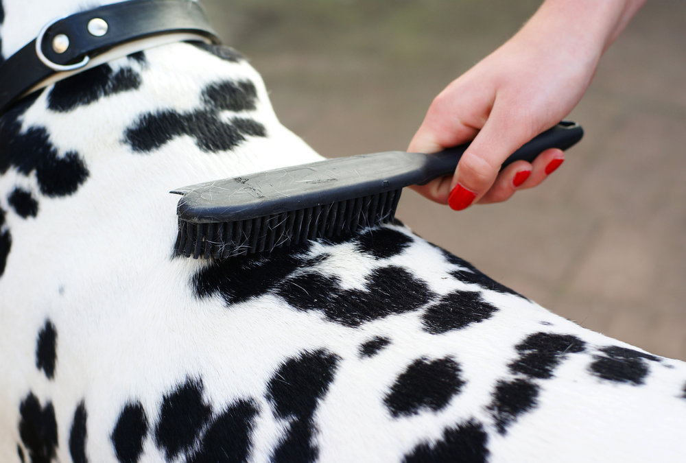 brushing dog - nov 26, 2018.jpg