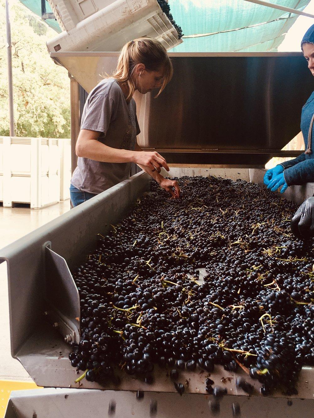 Mojave Wines  2014 Pinot Noir