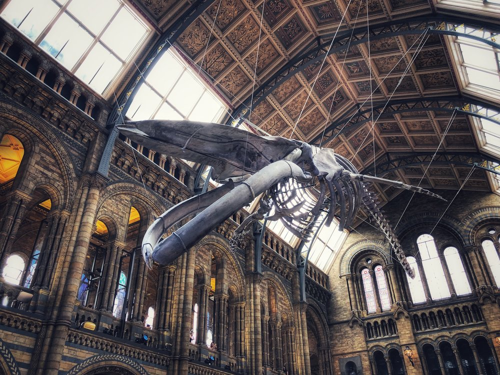 A whale of a time at the Museum!