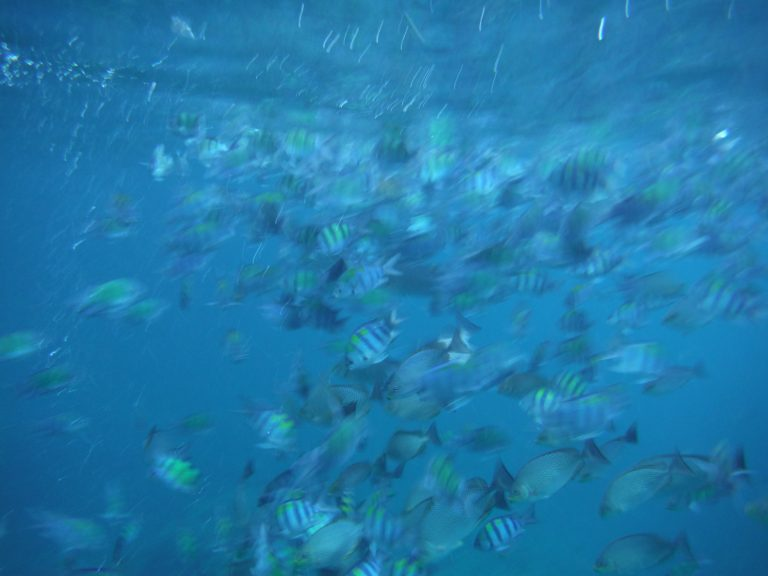 Some of the many fish we saw snorkeling.