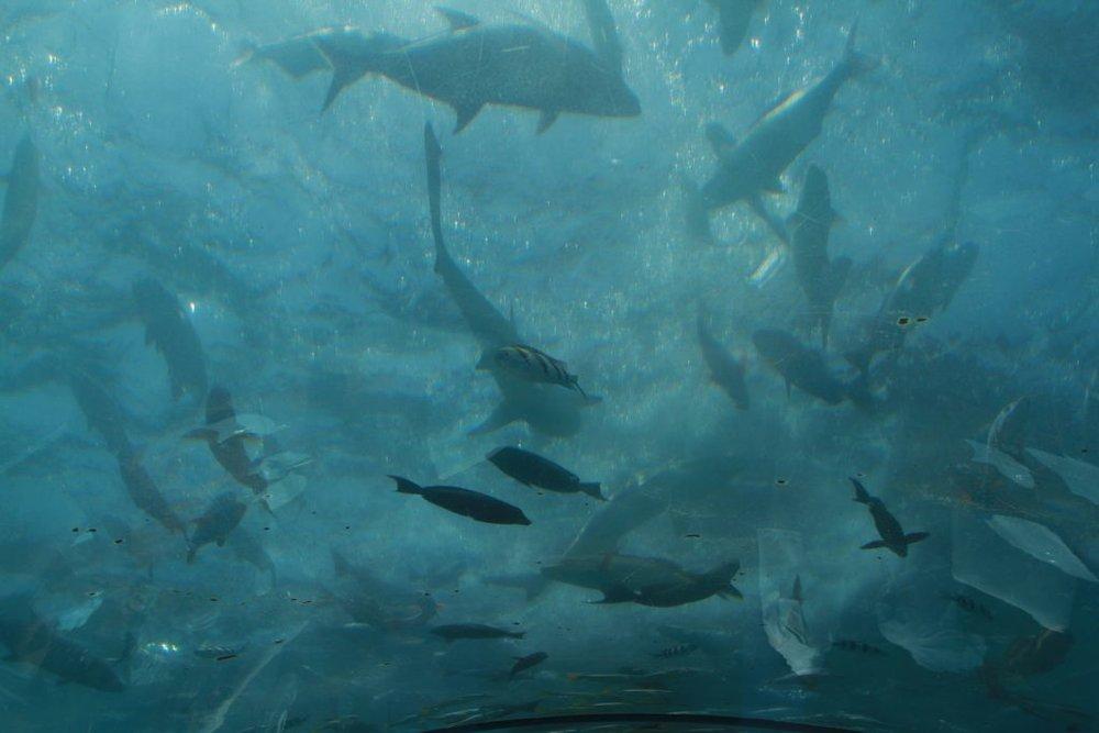 Undersea-Restaurant-Ithaa-Conrad-Hilton-Maldives-29-1024x683.jpg