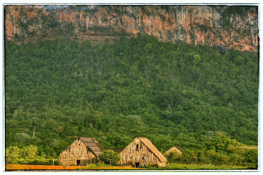 The drying barns for the tobacco leaves.in the National Park, where no machinery can be used.