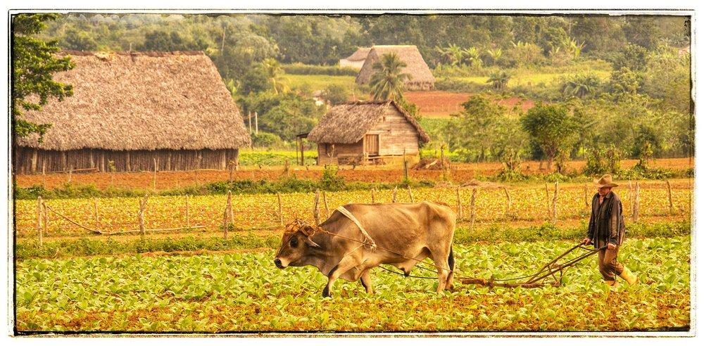 Vinales (SW) Parque Nacional de Vinales Cuba  (4).jpeg